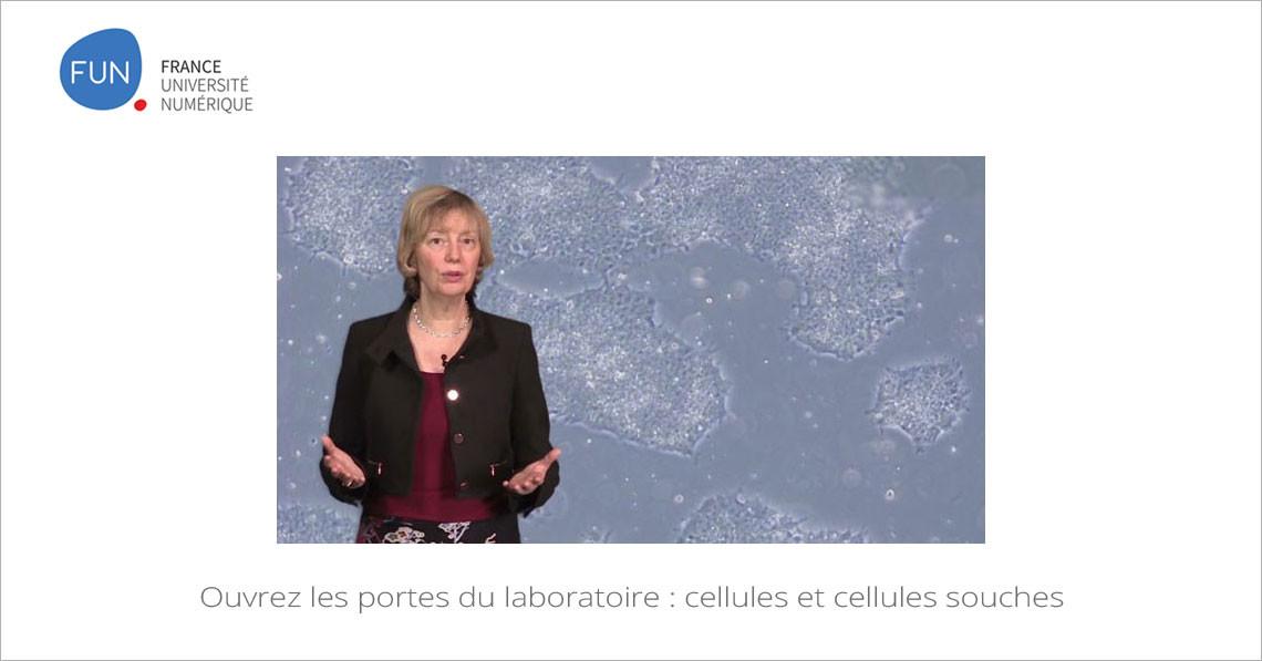 Ouvrez les portes du laboratoire : cellules et cellules souches