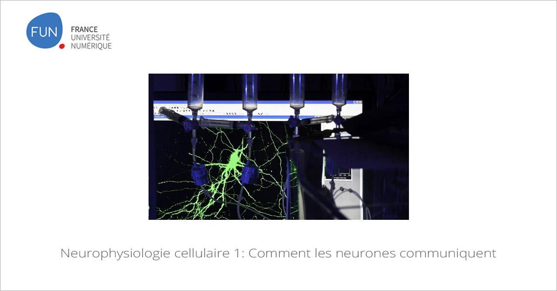 MOOC Neurophysiologie cellulaire 1: Comment les neurones communiquent