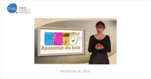 MOOC Anatomie du Bois